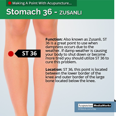 ST36 acupuncture point for dampness